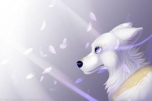 Petals by LiaBorderCollie