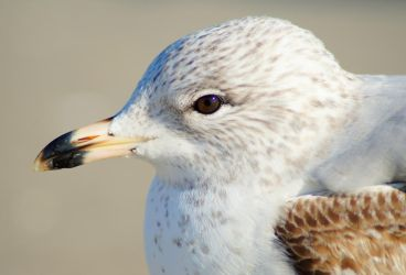 Patterns of a Sea Gull by Fail-Avenger