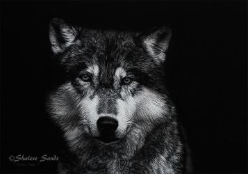 Timber Wolf - Scratchboard by ShaleseSands