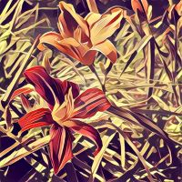 Orchids by bgiffo