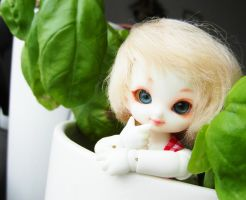 PinPin in Basil by Nattserier