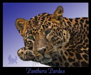 Panthera Pardus - COMMISSION by DarkwolfUntamed