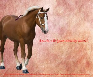Belgian Horse Picture by merry13