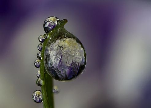 Frozen dew by Alliec