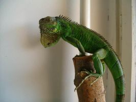 Lizard by Cab-GdL