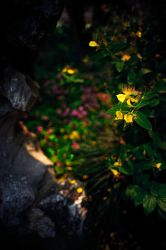 Dots of color by Andross01