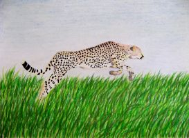 Cheetah leaping by Mis-misunderstood
