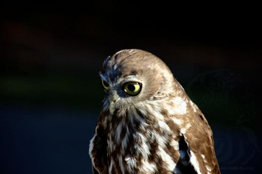 My.. what big eyes... by Pardus