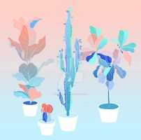 pot plants by reminisense