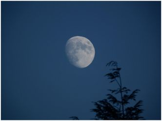 The Rising Moon. by Sparkle-Photography