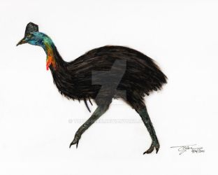 Pastel Cassowary by ToddGreen