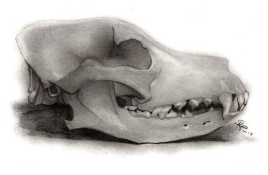 Dog Skull by RockValley