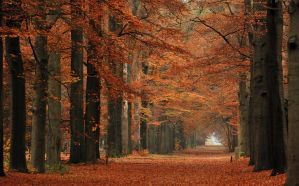 A colourful autumnal memory from 2012 by jchanders