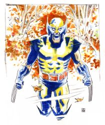 Wolverine in the woods by deankotz