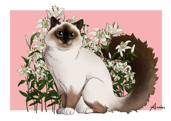 Amongst the lilies by Ashurana