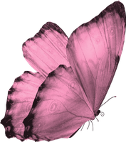 Butterfly Png by yotoots