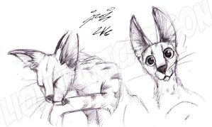 African Serval by Lionheartcartoon