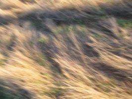 Blonde Grass 2 by FiLH