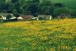 Buttercup Field by Cherry-Cheese-Cake