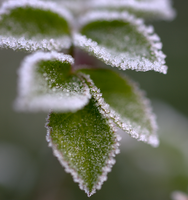 Frosty morning 5 by bmh1