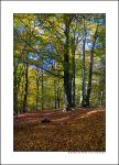 Kleve Forest I by sandervandenberg