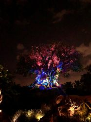 Tree of Life at Night by ashbrigham