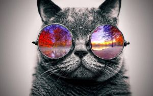 Cool Cat: Nature by ToValhalla
