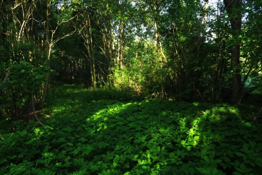 Spring forest 3 by MASYON