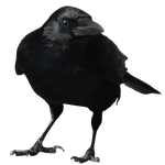 crow 9 by peroni68