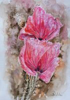 Poppies by danuta50