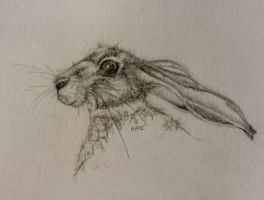 Hare by Pippyiongstocking