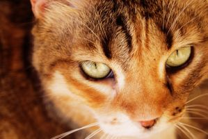 Beaux Yeux by Masi-M