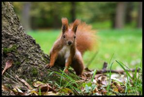 It's squirrel theritory by squirrelhollow