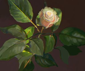 Old Rose by oakenvial