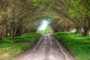 The pathway by Grayda