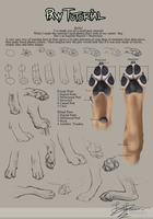 Paw Tutorial 2012 by HannasArtStudio