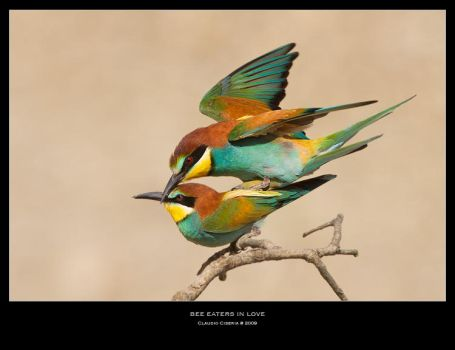 Bee Eaters in Love by ClaudeG
