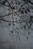 Branches and Bulbs  by peterkopher