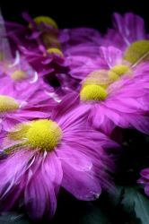 3 flowers by cacalvinon