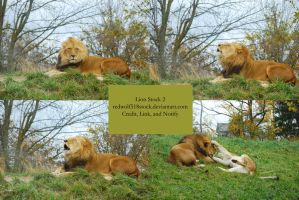 Lion Stock 2 by redwolf518stock