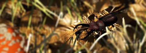 Stag beetle on dry beech leaves by 3DVitality