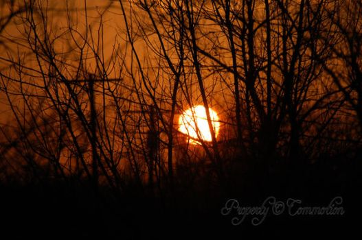 Sun Going Down Through the Tree by LIfes-Commotion