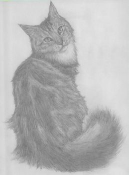 Maine Coon Cat Sketch by RR-DF-RaptorRed
