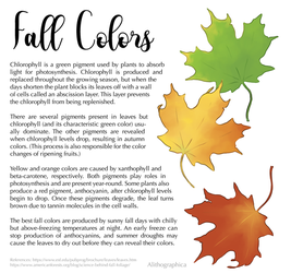 Science Fact Friday: Fall Colors by Alithographica