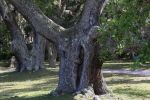Ancient Live Oaks, Cumberland Island by RichardEly