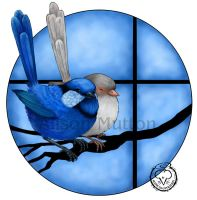 Splendid Fairy Wrens by Alene