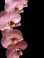 Pretty in Pink by LCArtDesign