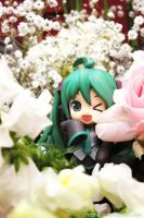 Flower Play Time by chroneco
