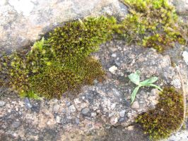 Moss stock 1 by Random-Acts-Stock