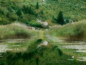 Reflections of Green and Gold by FiorellaDePietro